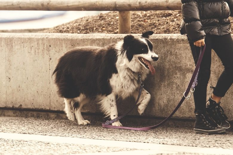 Nationwide Paid focus group for dog owners
